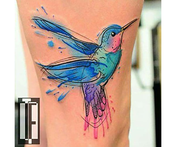 Blue and Pink Hummingbird Bursting with Energy